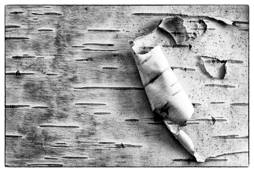 Birch Bark : details : TIMOTHY FLOYD PHOTOGRAPHER, NATURE PHOTOGRAPHY, PHOTO ESSAYS, PHOTOJOURNALISM