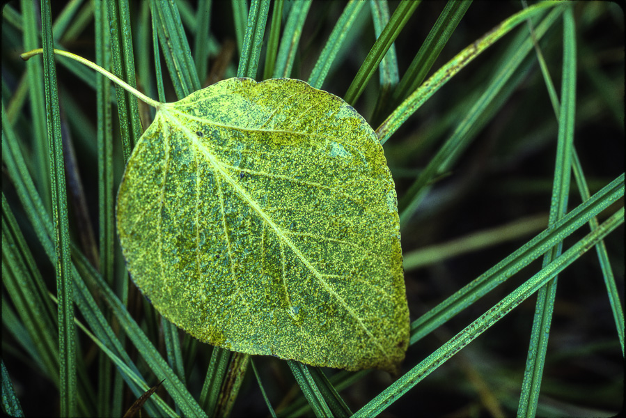 Leaf and Grass : details : TIMOTHY FLOYD PHOTOGRAPHER, NATURE PHOTOGRAPHY, PHOTO ESSAYS, PHOTOJOURNALISM