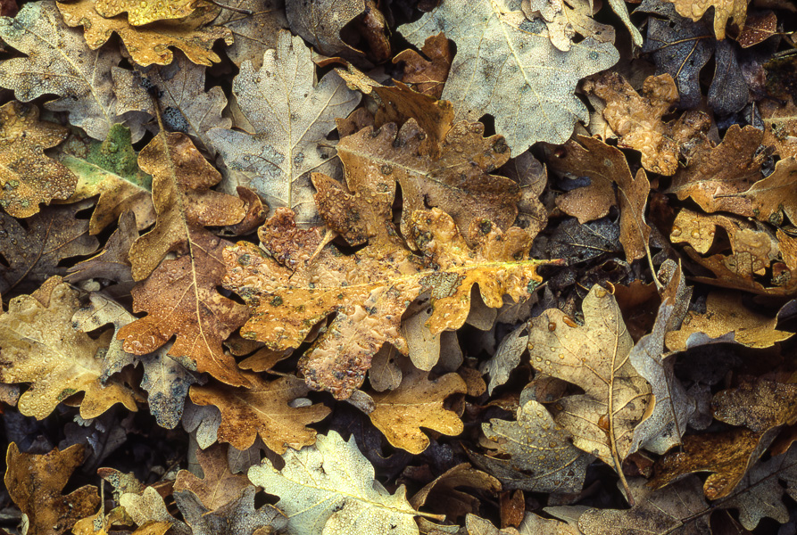 Autumn Leaves 2 : details : TIMOTHY FLOYD PHOTOGRAPHER, NATURE PHOTOGRAPHY, PHOTO ESSAYS, PHOTOJOURNALISM
