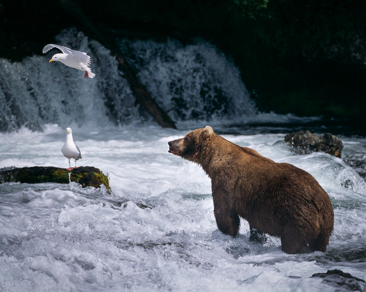 Contemplation : bears : TIMOTHY FLOYD PHOTOGRAPHER, NATURE PHOTOGRAPHY, PHOTO ESSAYS, PHOTOJOURNALISM
