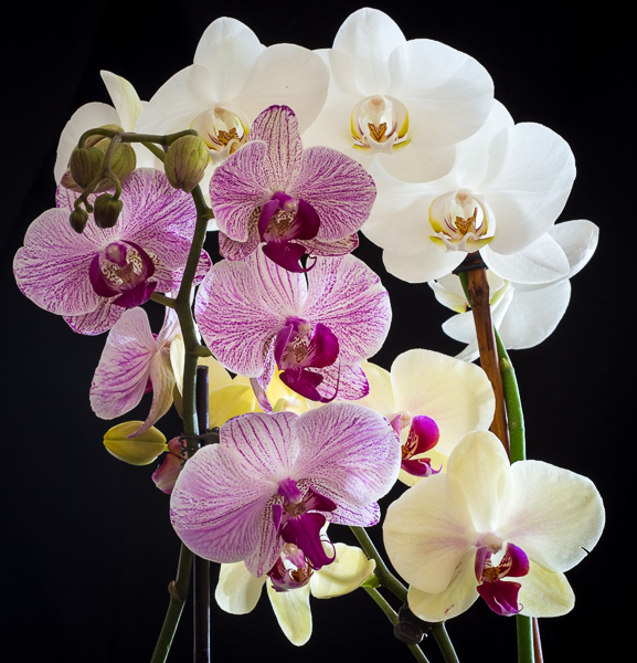 Orchids : details : TIMOTHY FLOYD PHOTOGRAPHER, NATURE PHOTOGRAPHY, PHOTO ESSAYS, PHOTOJOURNALISM