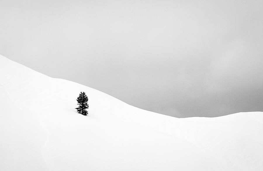 Lone Pine : monochrom : TIMOTHY FLOYD PHOTOGRAPHER, NATURE PHOTOGRAPHY, PHOTO ESSAYS, PHOTOJOURNALISM