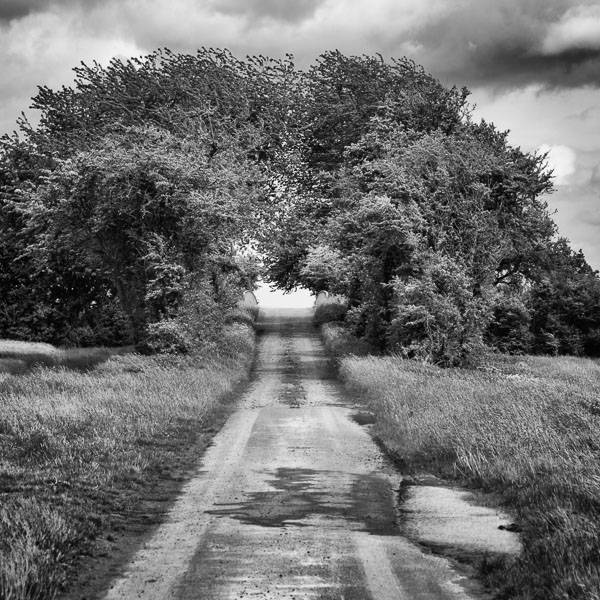 Dirt Road, Italy : monochrom : TIMOTHY FLOYD PHOTOGRAPHER, NATURE PHOTOGRAPHY, PHOTO ESSAYS, PHOTOJOURNALISM