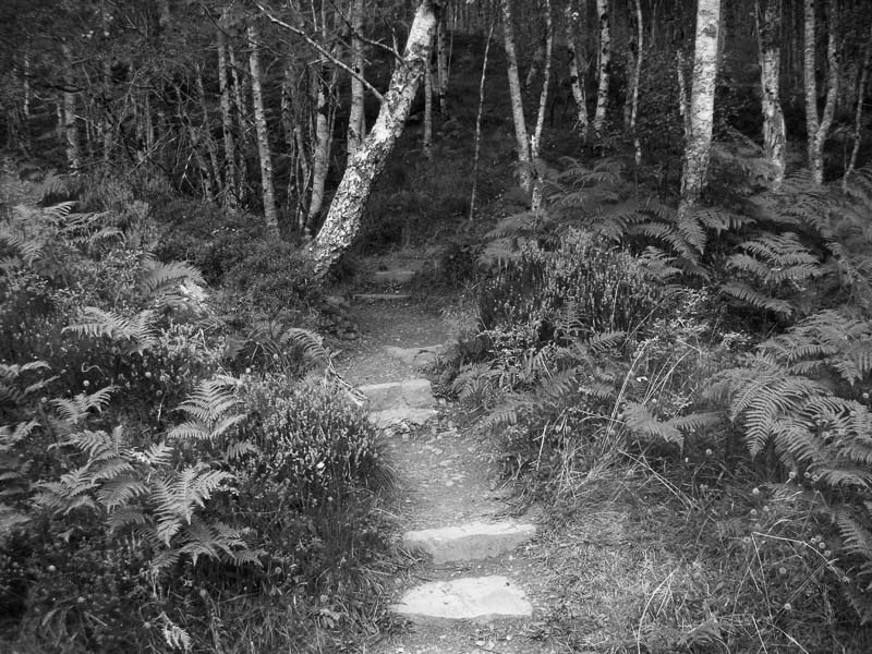 Path, Glen Affric : monochrom : TIMOTHY FLOYD PHOTOGRAPHER, NATURE PHOTOGRAPHY, PHOTO ESSAYS, PHOTOJOURNALISM
