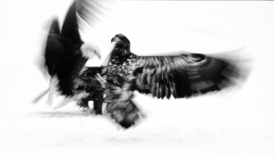 Dominance : monochrom : TIMOTHY FLOYD PHOTOGRAPHER, NATURE PHOTOGRAPHY, PHOTO ESSAYS, PHOTOJOURNALISM