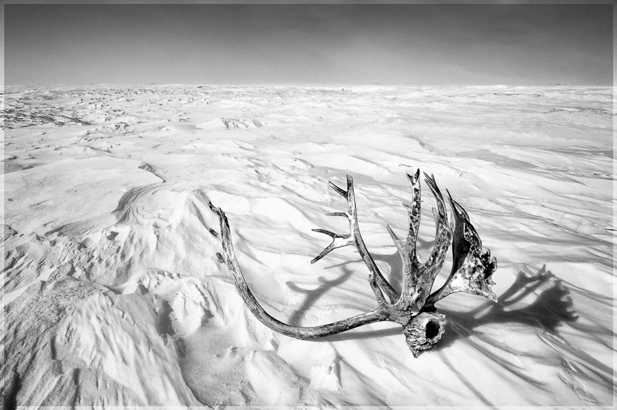 Caribou Antlers : monochrom : TIMOTHY FLOYD PHOTOGRAPHER, NATURE PHOTOGRAPHY, PHOTO ESSAYS, PHOTOJOURNALISM