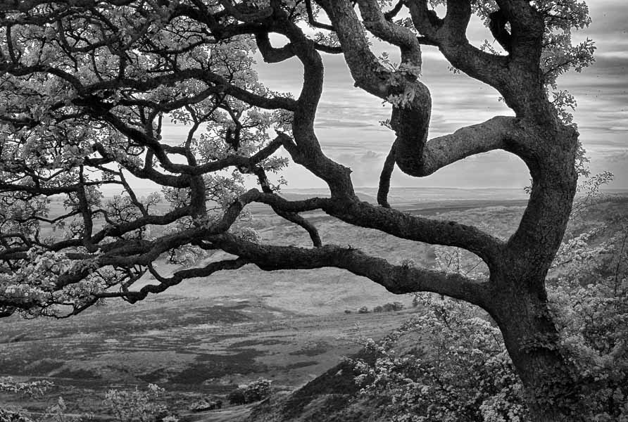 Yorkshire Moors : monochrom : TIMOTHY FLOYD PHOTOGRAPHER, NATURE PHOTOGRAPHY, PHOTO ESSAYS, PHOTOJOURNALISM