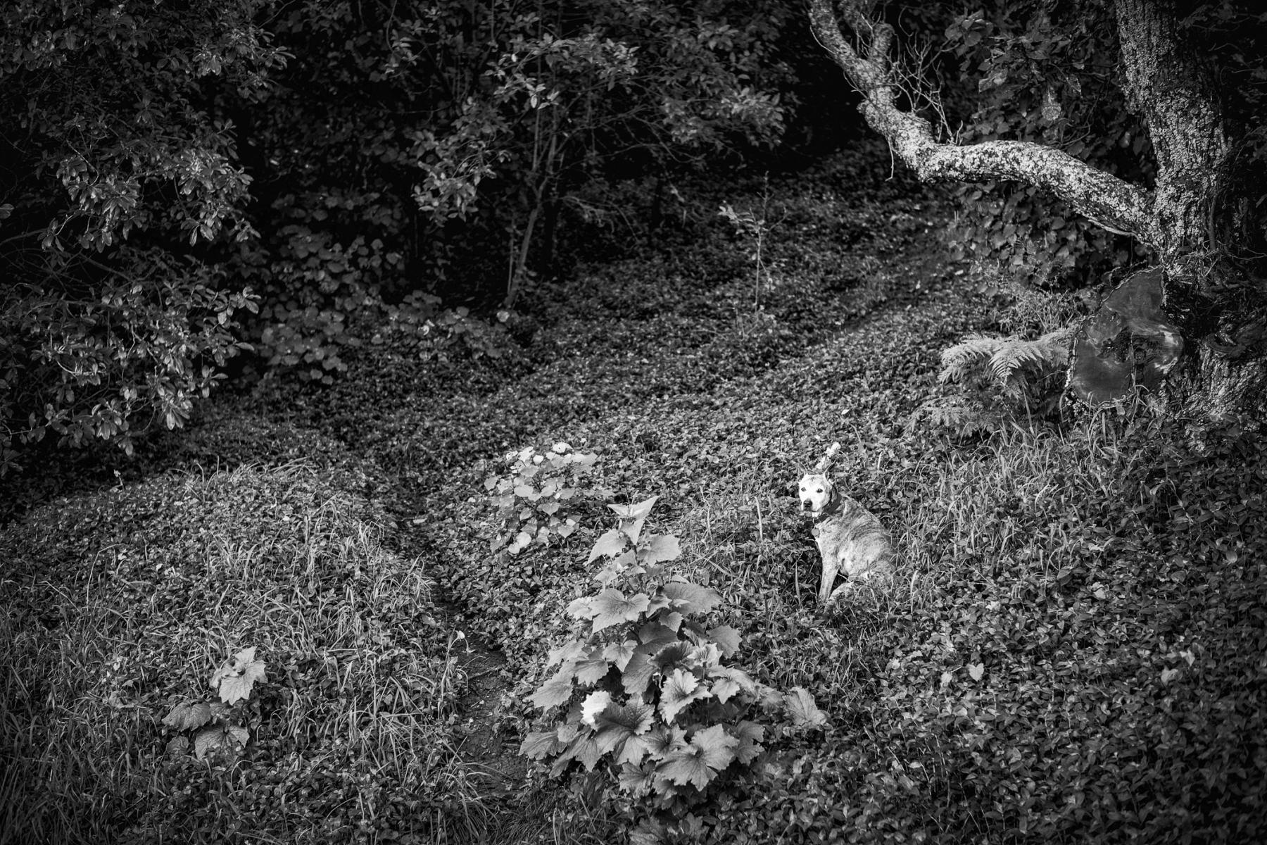 Dog in Forest, Family of Dog.  Apologies to Mr. Bullock : monochrom : TIMOTHY FLOYD PHOTOGRAPHER, NATURE PHOTOGRAPHY, PHOTO ESSAYS, PHOTOJOURNALISM