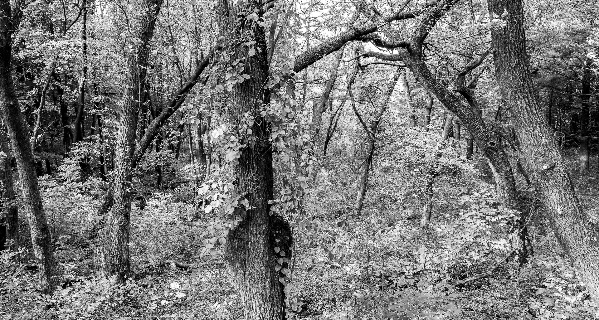 University of Minnesota Arboretum : monochrom : TIMOTHY FLOYD PHOTOGRAPHER, NATURE PHOTOGRAPHY, PHOTO ESSAYS, PHOTOJOURNALISM