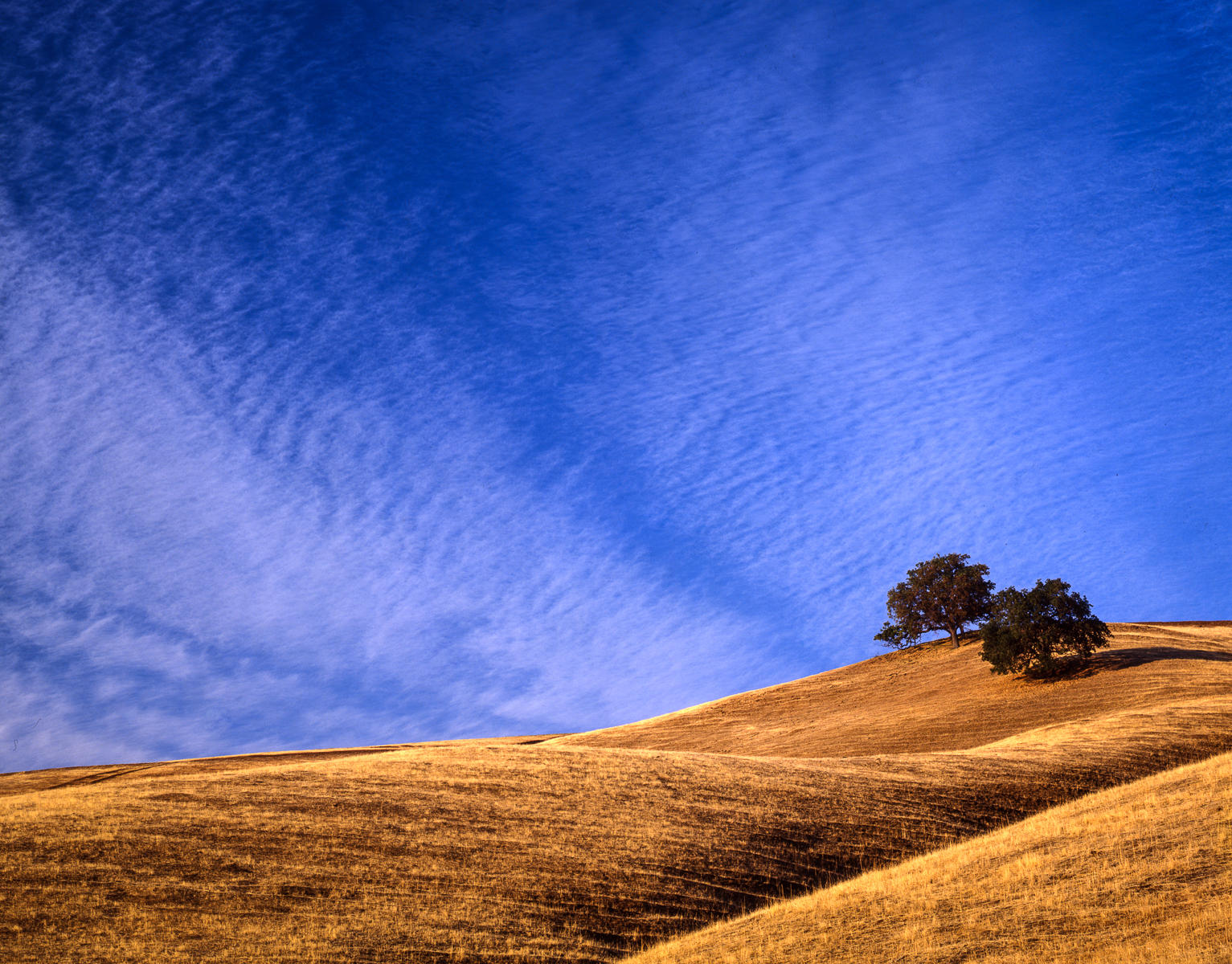 Oak Trees, Mt. Diablo Foothills, California : landscapes : TIMOTHY FLOYD PHOTOGRAPHER, NATURE PHOTOGRAPHY, PHOTO ESSAYS, PHOTOJOURNALISM