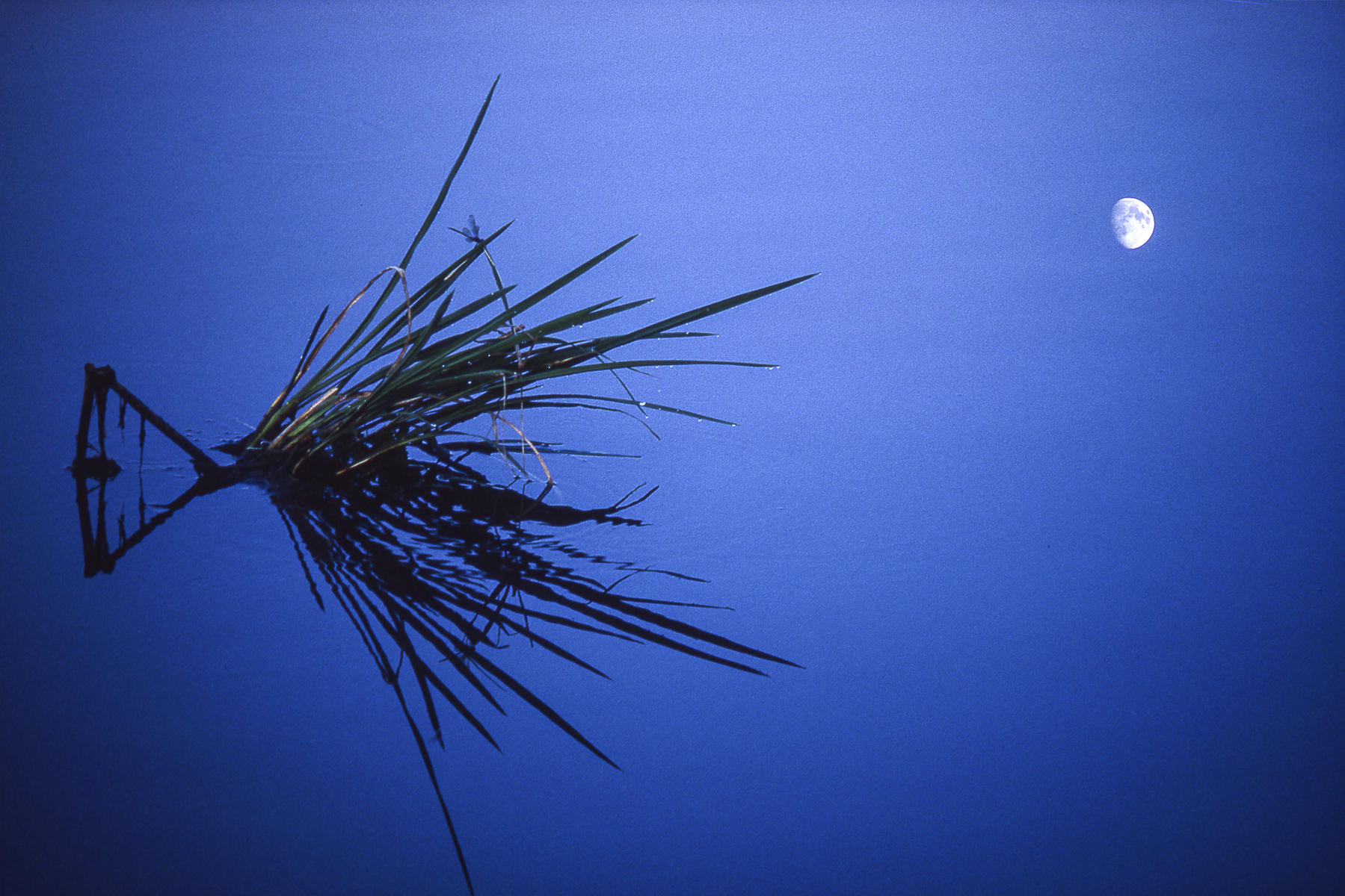 Moon and Dragonfly, Bivens Arm Nature Preserve, Florida : landscapes : TIMOTHY FLOYD PHOTOGRAPHER, NATURE PHOTOGRAPHY, PHOTO ESSAYS, PHOTOJOURNALISM