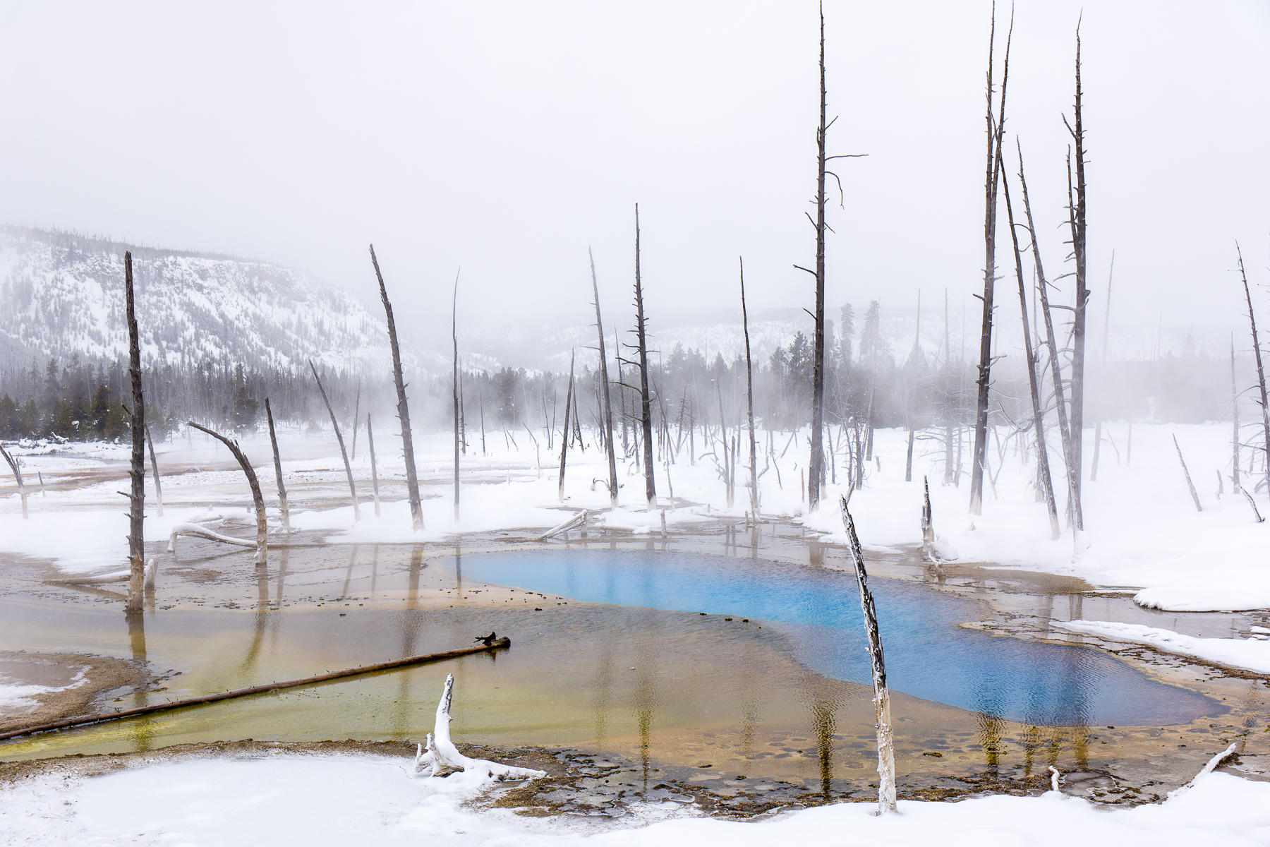 Opalescent Pool, Yellowstone National Park : landscapes : TIMOTHY FLOYD PHOTOGRAPHER, NATURE PHOTOGRAPHY, PHOTO ESSAYS, PHOTOJOURNALISM