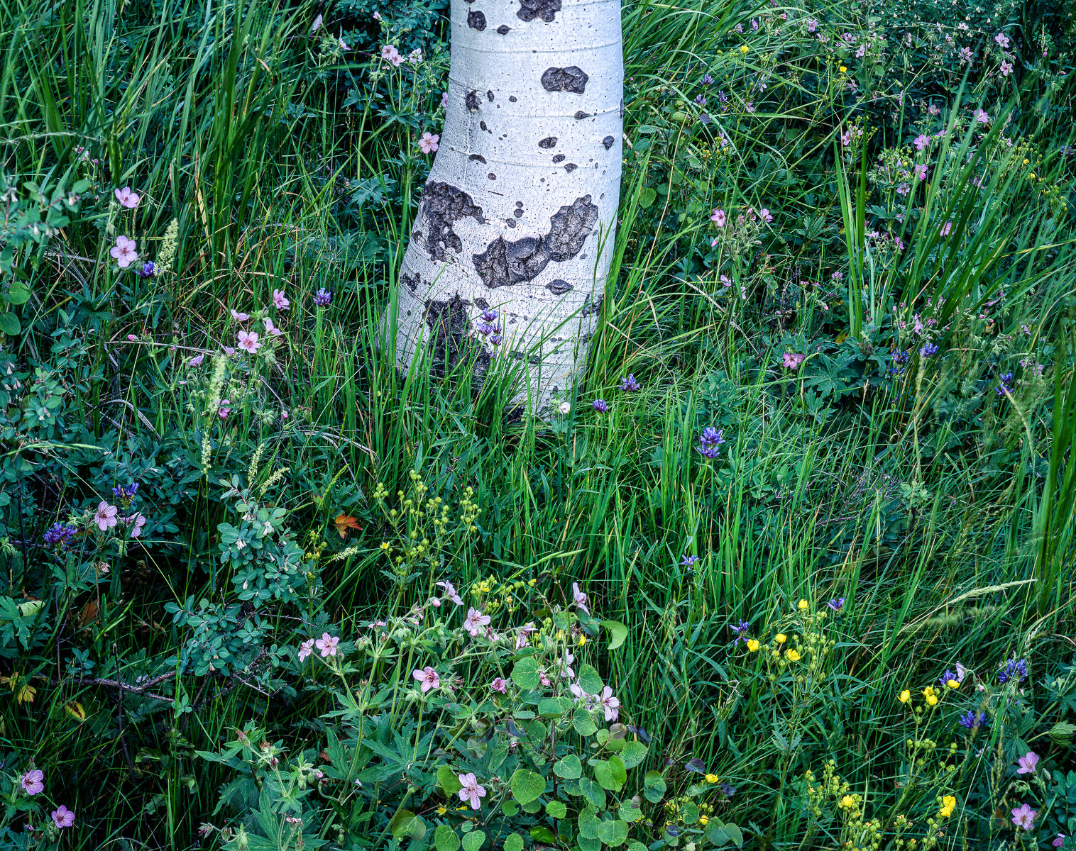 Pine Trunk and Wildflowers : landscapes : TIMOTHY FLOYD PHOTOGRAPHER, NATURE PHOTOGRAPHY, PHOTO ESSAYS, PHOTOJOURNALISM