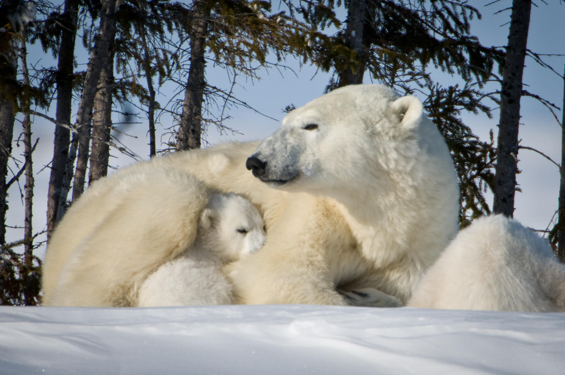 Protection : bears : TIMOTHY FLOYD PHOTOGRAPHER, NATURE PHOTOGRAPHY, PHOTO ESSAYS, PHOTOJOURNALISM