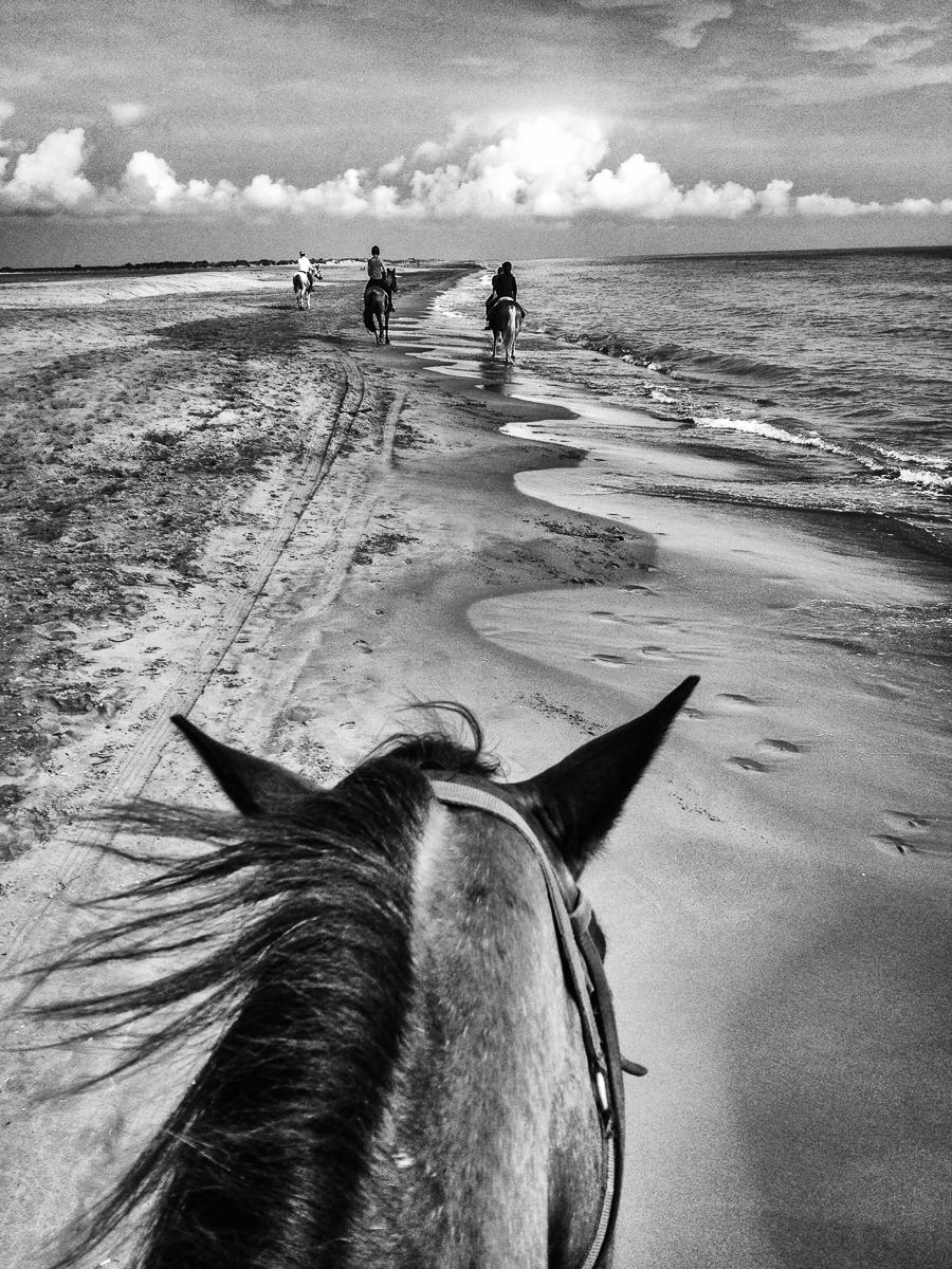 Riding Leustic Along the Mediterranean Sea, Camargue, France : equus et al : TIMOTHY FLOYD PHOTOGRAPHER, NATURE PHOTOGRAPHY, PHOTO ESSAYS, PHOTOJOURNALISM