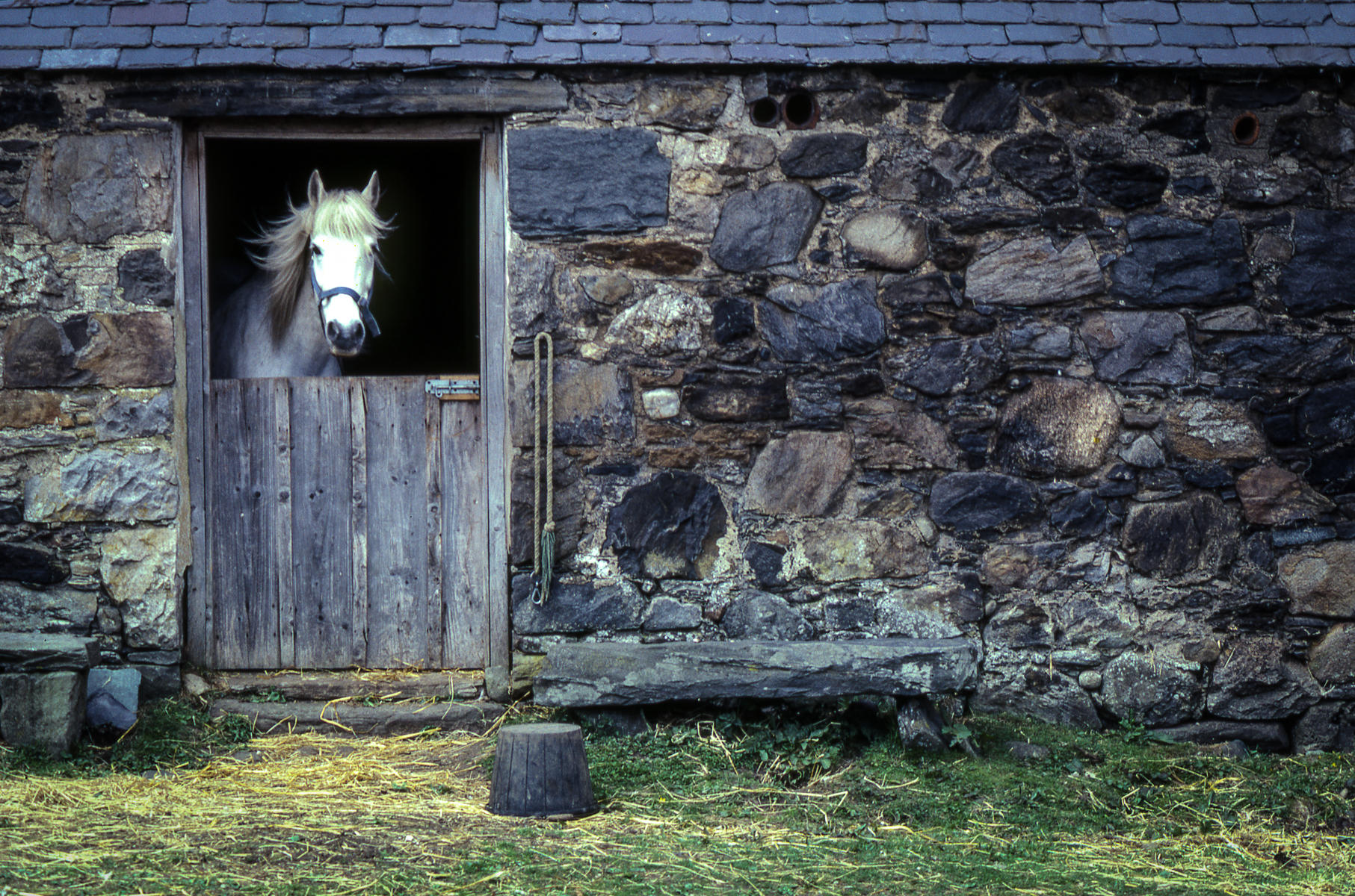 Scotland, near Loch Ness : equus et al : TIMOTHY FLOYD PHOTOGRAPHER, NATURE PHOTOGRAPHY, PHOTO ESSAYS, PHOTOJOURNALISM
