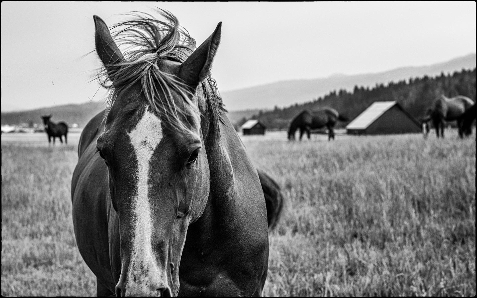 Near Cascade, Idaho : equus et al : TIMOTHY FLOYD PHOTOGRAPHER, NATURE PHOTOGRAPHY, PHOTO ESSAYS, PHOTOJOURNALISM