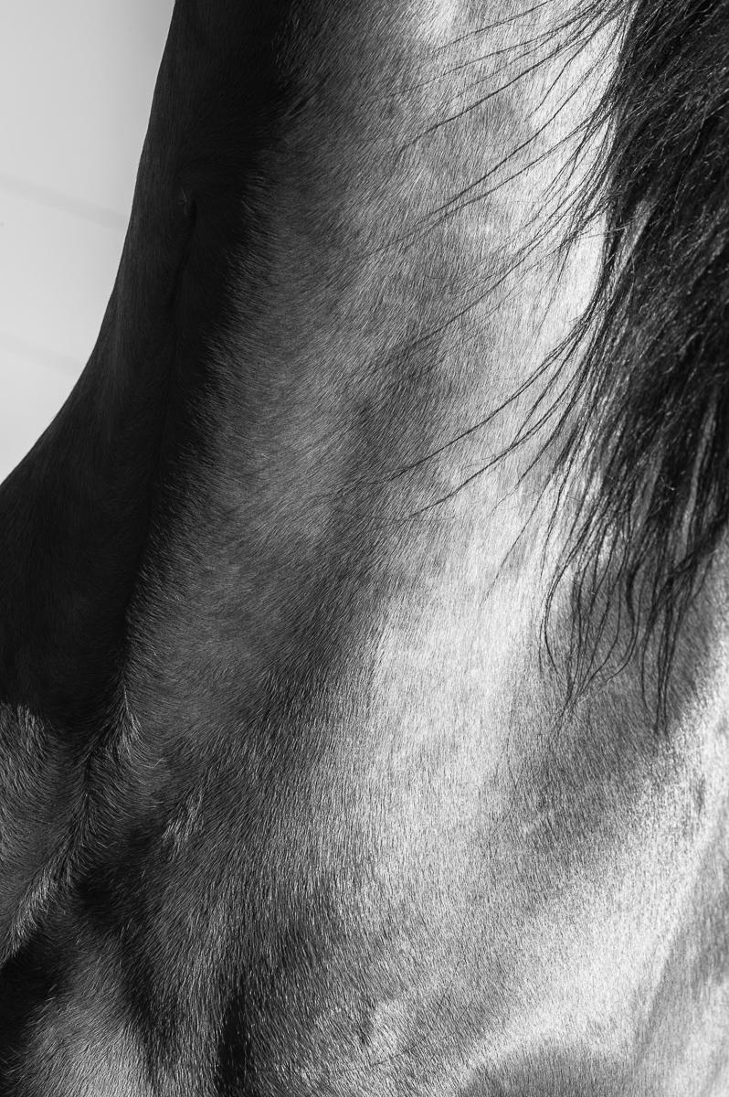 Kuli, from the series, Horsescapes : equus et al : TIMOTHY FLOYD PHOTOGRAPHER, NATURE PHOTOGRAPHY, PHOTO ESSAYS, PHOTOJOURNALISM