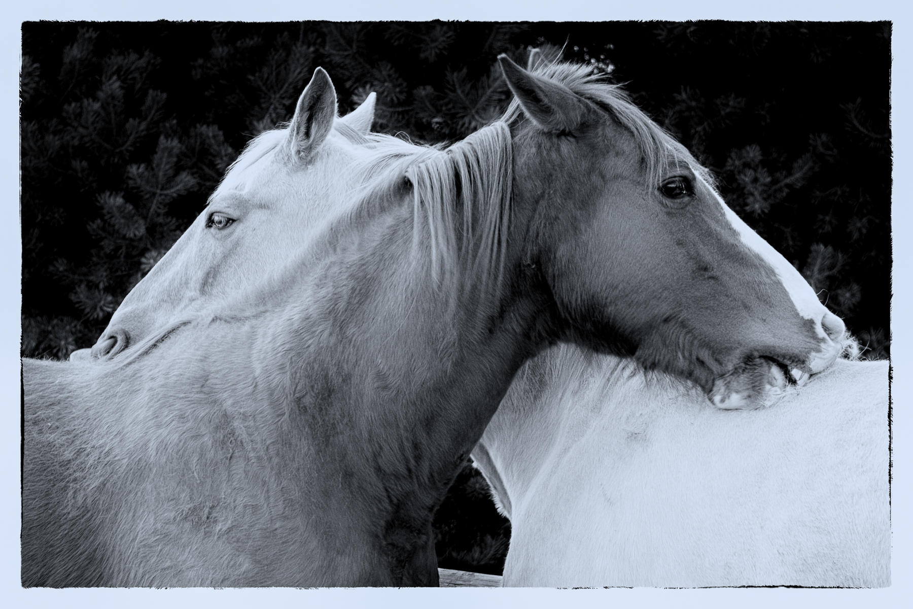 Jed and Spirit  : equus et al : TIMOTHY FLOYD PHOTOGRAPHER, NATURE PHOTOGRAPHY, PHOTO ESSAYS, PHOTOJOURNALISM
