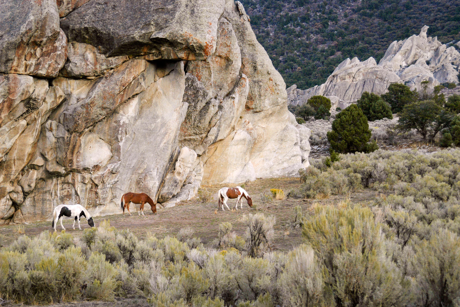 Wild Horses, City of Rocks, Idaho : equus et al : TIMOTHY FLOYD PHOTOGRAPHER, NATURE PHOTOGRAPHY, PHOTO ESSAYS, PHOTOJOURNALISM